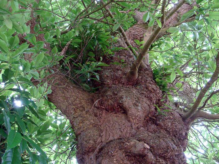 Mein lieber Baum